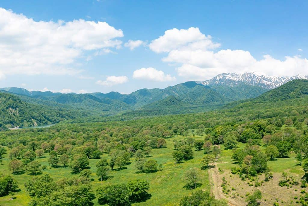 笹ヶ峰高原クロスカントリーコース